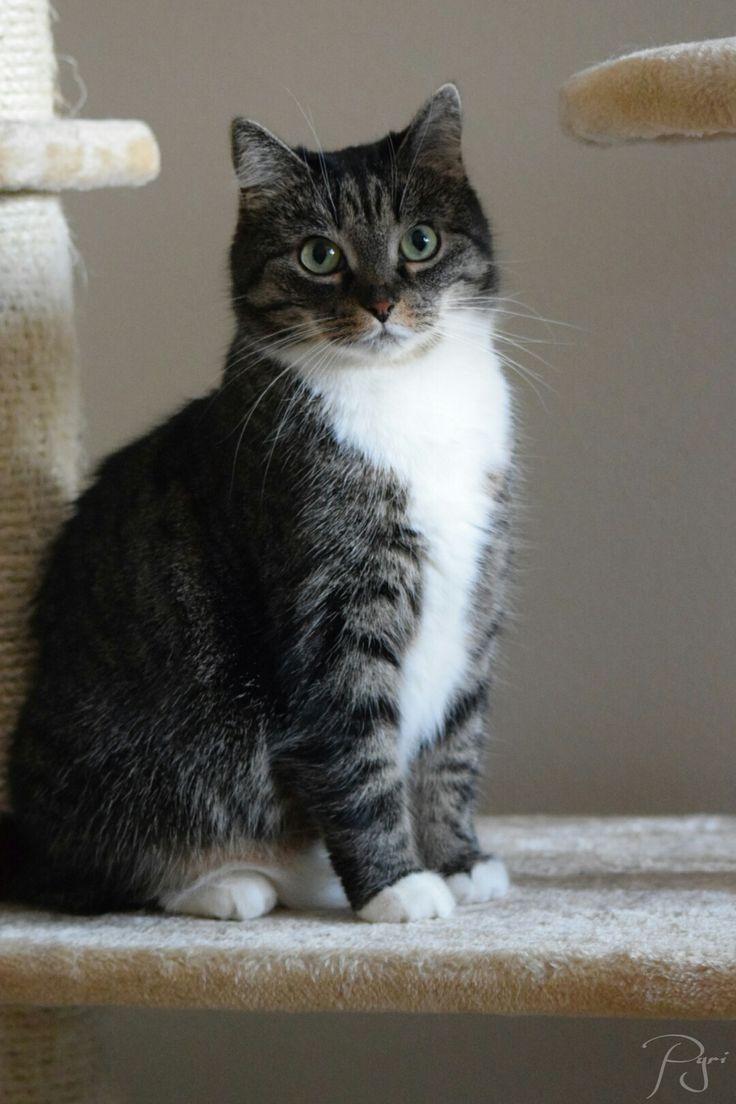 33 best cute cats pics images on Pinterest