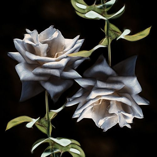 ~*~THERE IS BEAUTY IN SIMPLICITY~*~