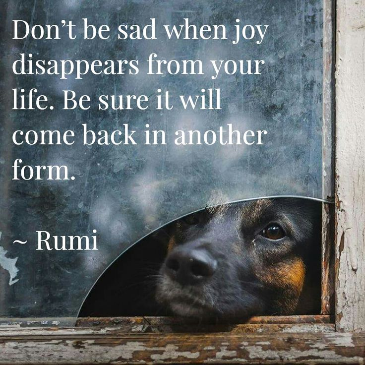Rumi quote....                                                                                                                                                                                 Mehr