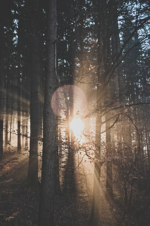 lvndscpe:  Forest flares | by Ju On This photo as wallpaper on...