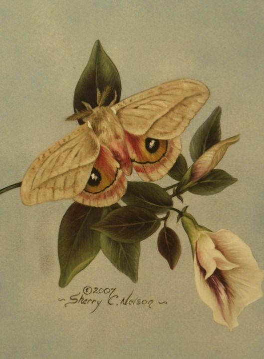 P Moth Decorator 21 best arte pintura S...