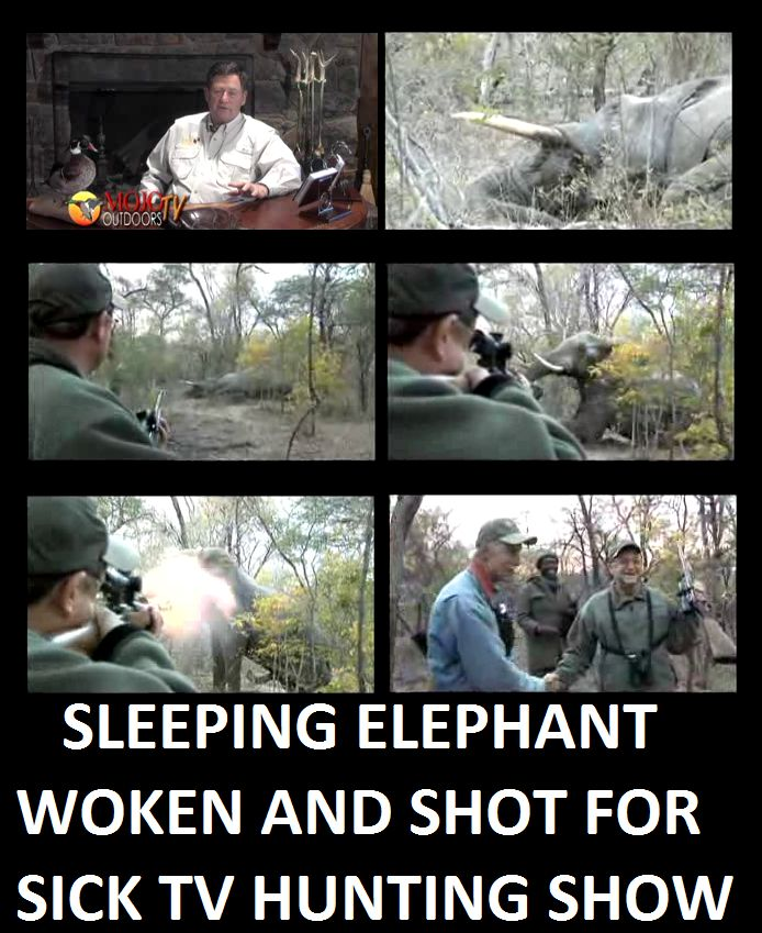 Sleeping elephant woken up to be shot for sick TV hunting show >>> http://africageographic.com/blog/sleeping-elephant-woken-up-to-be-shot/ … pic.twitter.com/7vcZ4ksfYp. Posted to DESERT HEARTS Animal Compassion  www.facebook.com/desertheartsphoenix  6/4/2014