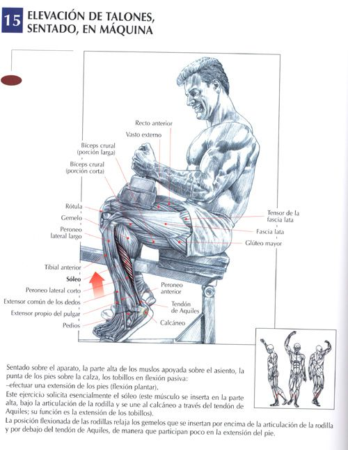 25 best ejercicios images on pinterest bodybuilding for Posters para gimnasios