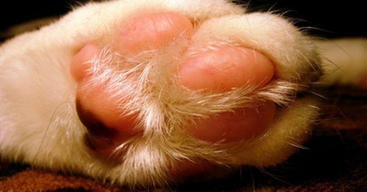 Como criar um molde da pata do seu gato . Os animais de estimação podem ser considerados membros da família e, portanto, incluídos em tradições. Por exemplo, você pode fazer uma impressão da pata do seu gato, assim como faria da mão de um filho. Quando estiver pronta, você poderá pendurá-la na árvore de Natal ou guardar em uma caixa para relembrar o seu gato no futuro. Ao fazer a ...