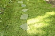 Low-Maintenance Lawn Alternatives: Ground Cover