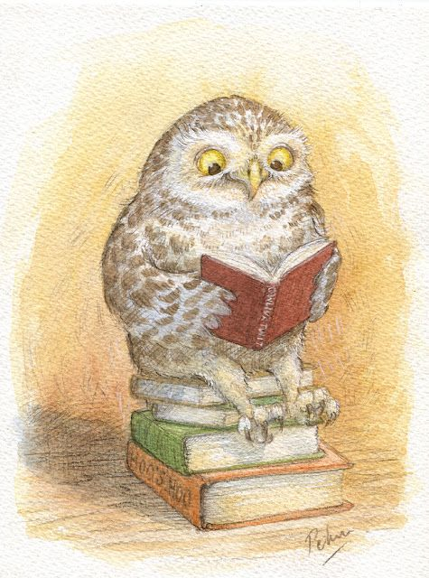 owl reading by Petra Brown