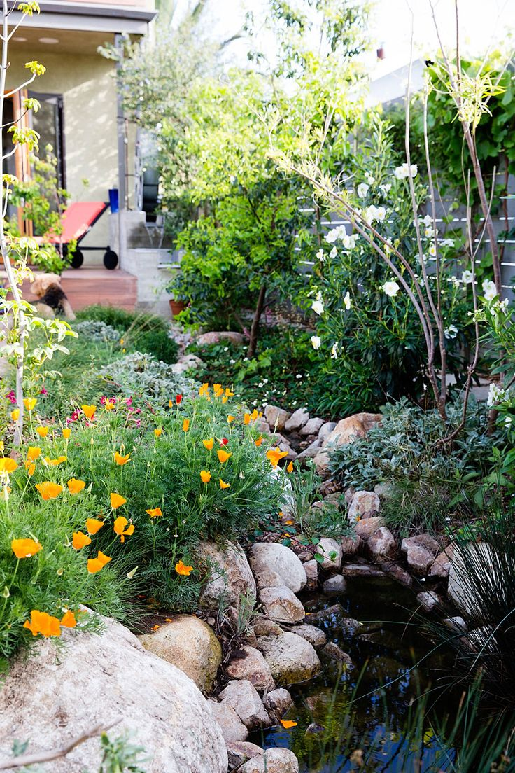 230 best Gardening in a Drought images on Pinterest | Landscaping ...