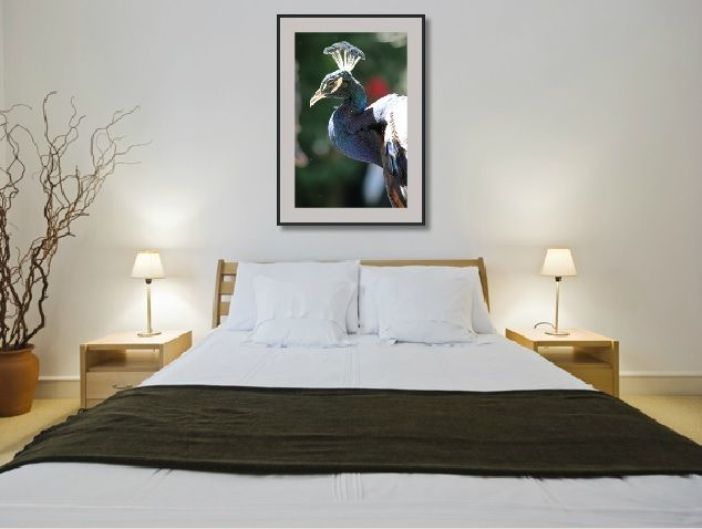 Peacocks are trending at the moment.  They also add a bit of classic color to any room.