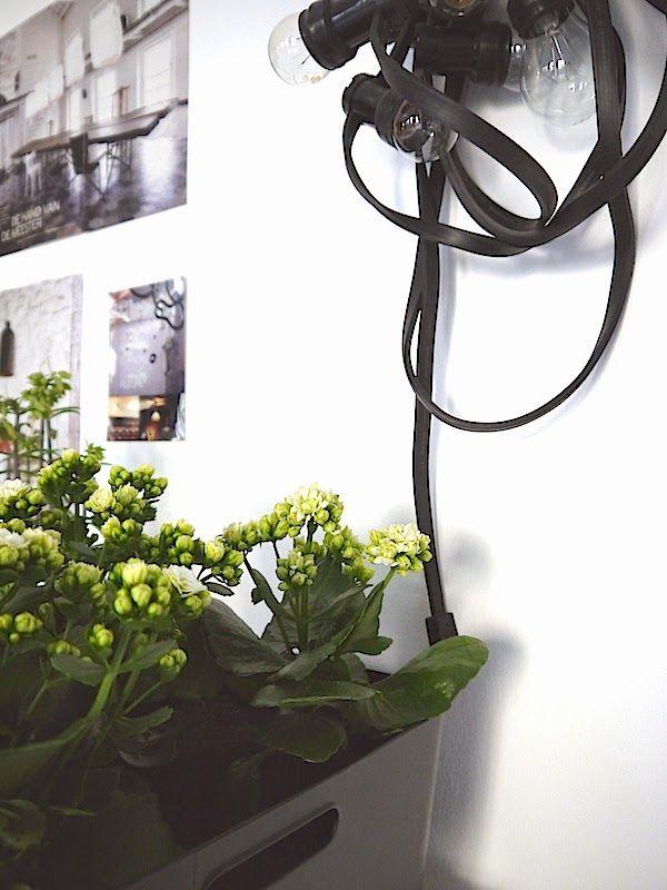 Greens at home | Kalanchoë