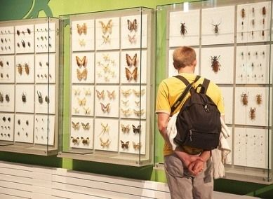 Insectarium, Montreal, QC The biggest museum dedicated to insects in North America, one of the largest in the world