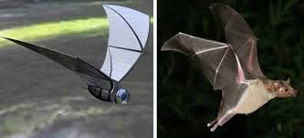 Image result for biomimicry