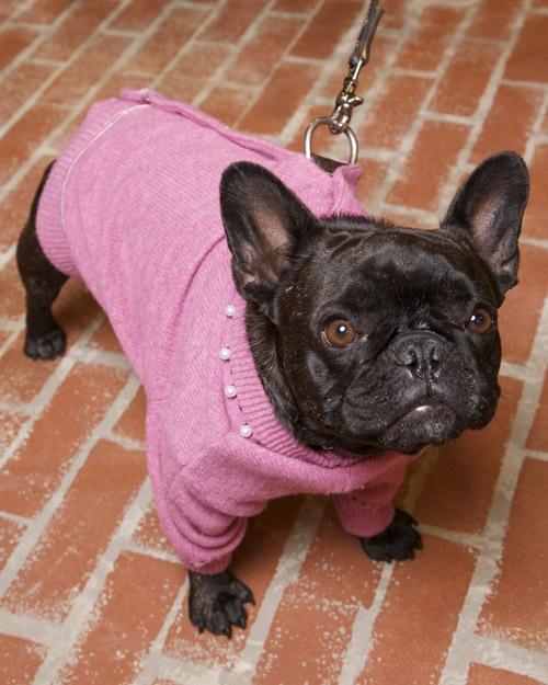 doggie coat