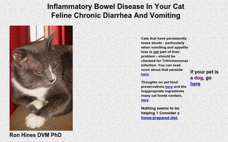how to stop chronic diarrhea in cats