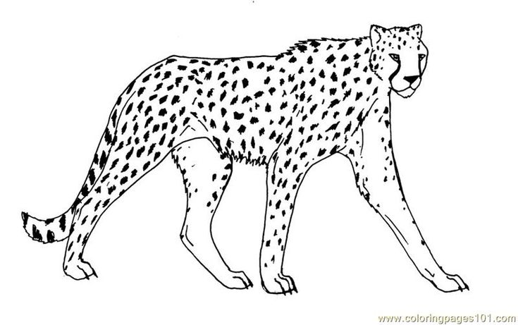 Best 25 Cheetah crafts ideas on