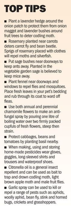 Useful tips for gardening and repelling pests using herbs!