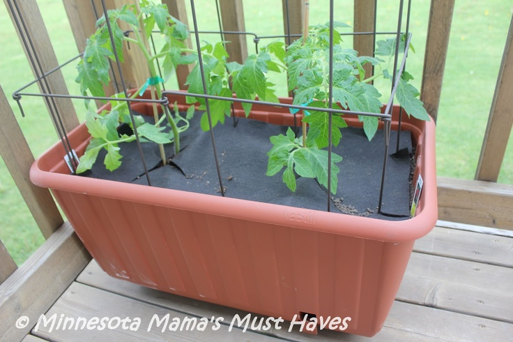 How to Grow Patio Tomatoes! {With a Plow and Hearth Review & $50 GC Giveaway!} | Minnesota Mama's Must Haves