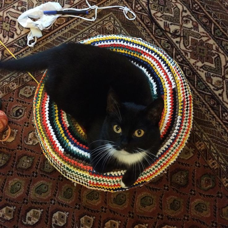 made from small old tyre and cut pantyhose waste #upcycling #upcyclingdesign #homedecor #handmade #catsofinstagram #catlovers #justabag #madeinpoland #waste #reuse #ecofriendly
