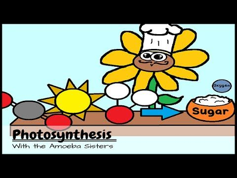 Good range of videos on different science topics. Might be a bit young for snr years but great info plus worksheets etc