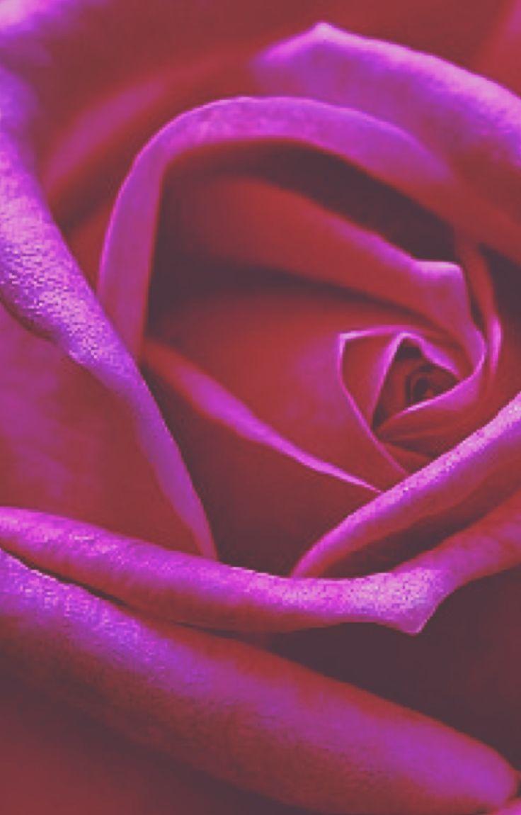 277 best flower me images on Pinterest | Roses, Background images ...