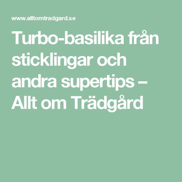 Turbo-basilika från sticklingar och andra supertips – Allt om Trädgård