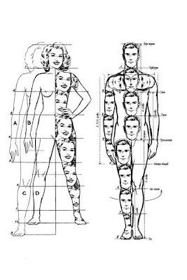 dimensioni del corpo umano - Cerca con Google