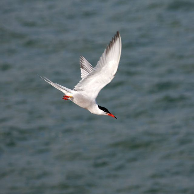 Tern diving for his dinner at Dun Laoghaire Harbour #dunlaoghaire #nature #bird #ireland