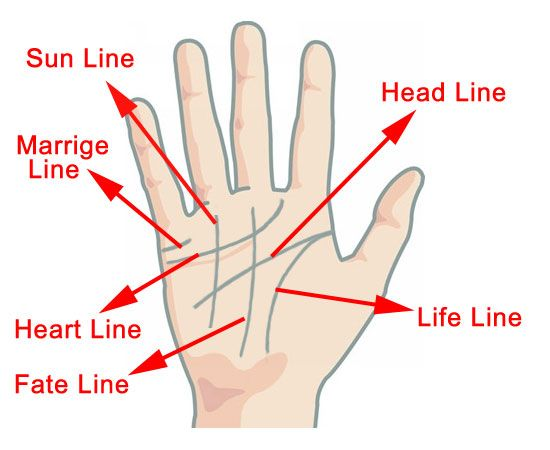 palm reading guide relationship lines on a genogram