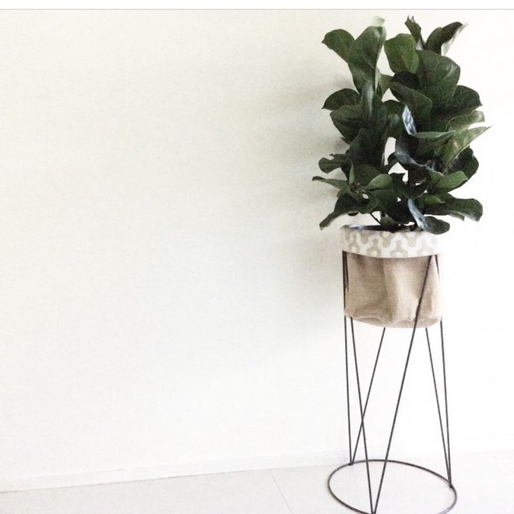 kmart pot stand repainted fiddle leaf fig