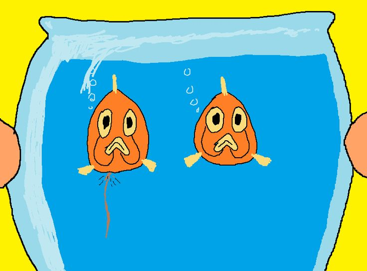 Never ever get involved in anything ever. http://dangermusichelps.blogspot.co.uk/2014/09/fish-made-me-broke.html
