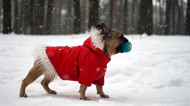 Take care of your #dog this #winter with these #ColdWeather care tips! #Pets