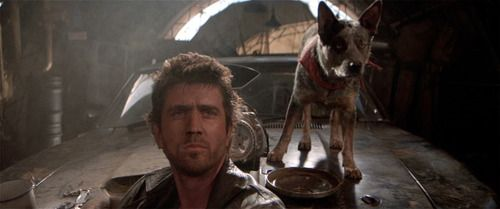 Dogs and Mad max on Pinterest