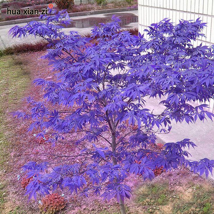 Japanese Garden Plants: Best 25+ Purple Heart Plant Ideas On Pinterest