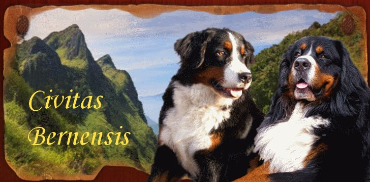 duży pies rodzinny - Szukaj w Google