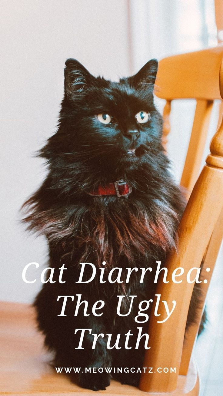 Diarrhea In Cats Causes Symptoms And Remedies Cats Cat Kittens Kitten Kitty Pets Pet Meow Moe Cutecats Cutecat C Cat Diarrhea Cats Cat Remedies