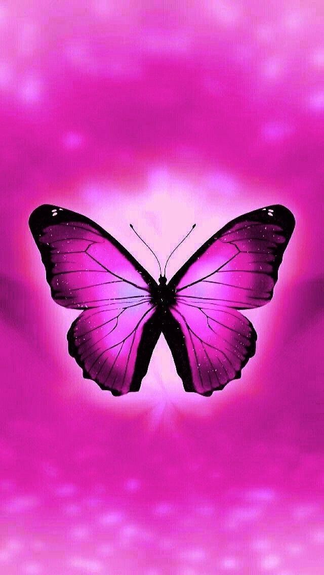Pink Butterfly Butterfly Wallpaper Purple Wallpaper Butterfly Photos