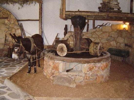Crete- Cretan olive oil farm thats how it was done