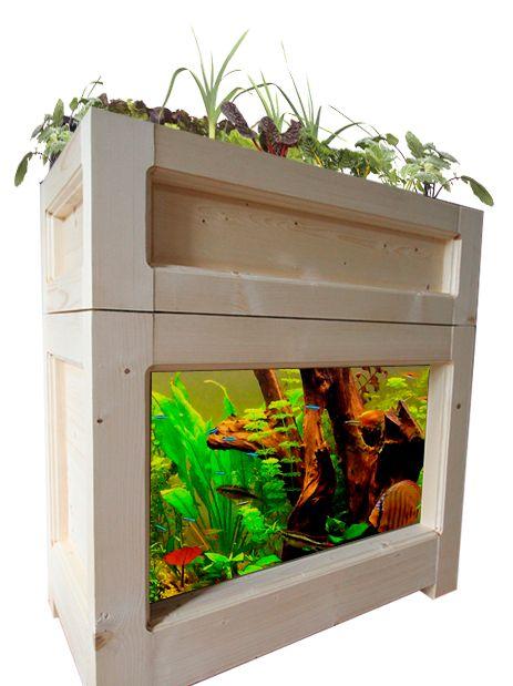 L'Aquaponie, une méthode de culture écologique et innovante