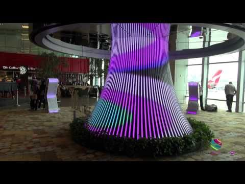 Social Tree Singapore Changi Airport - YouTube