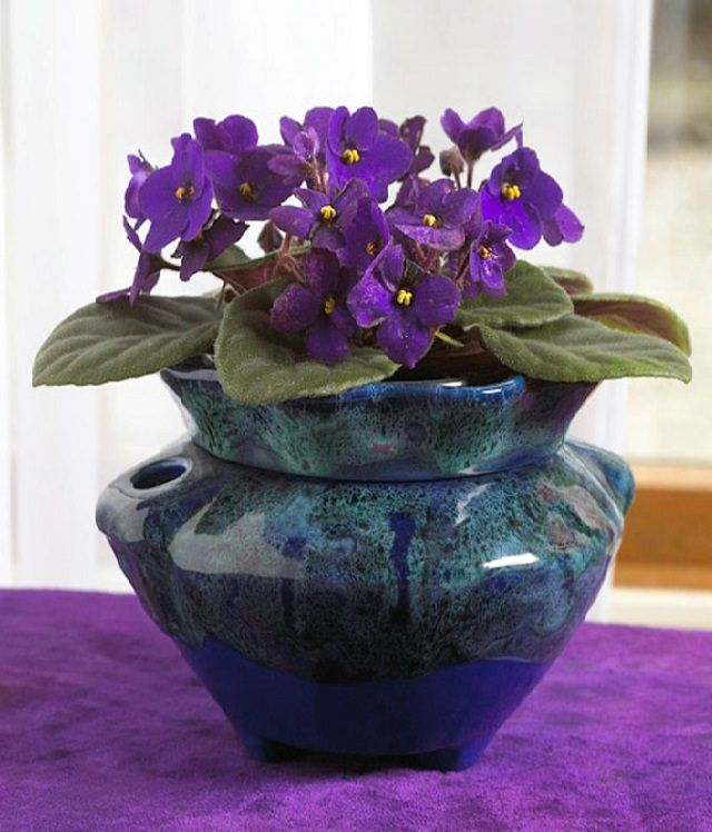 29 most beautiful houseplants you never knew about purple violetlawn plantsmost