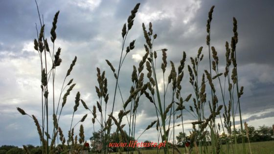 landscape grass sky clouds lifetaste