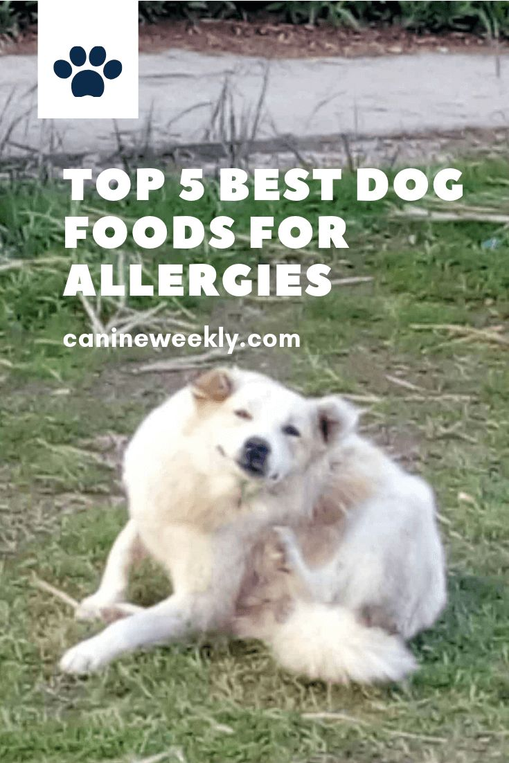 7 Best Hypoallergenic Dog Food For Allergies 2020 Best