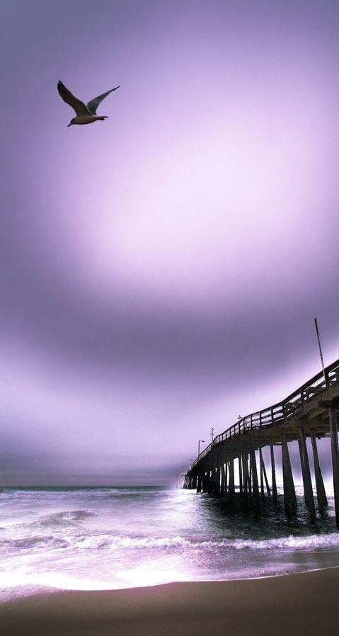 La La Lavender and Purple!!