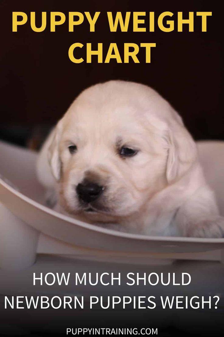 Puppy Weight Chart How Much Weight Should A Newborn Puppy Gain