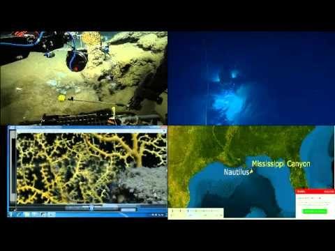 Тайны океанских глубин part 158, глубина погружения 1500 метров