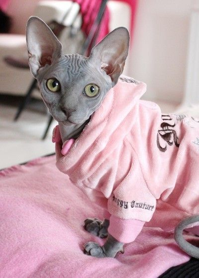 waaah! although I hate hairless cats this is cute with the juicy