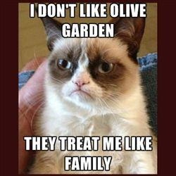 Tard The Grumpy Cat Meme   Tard the Grumpy Cat   Meme Generator