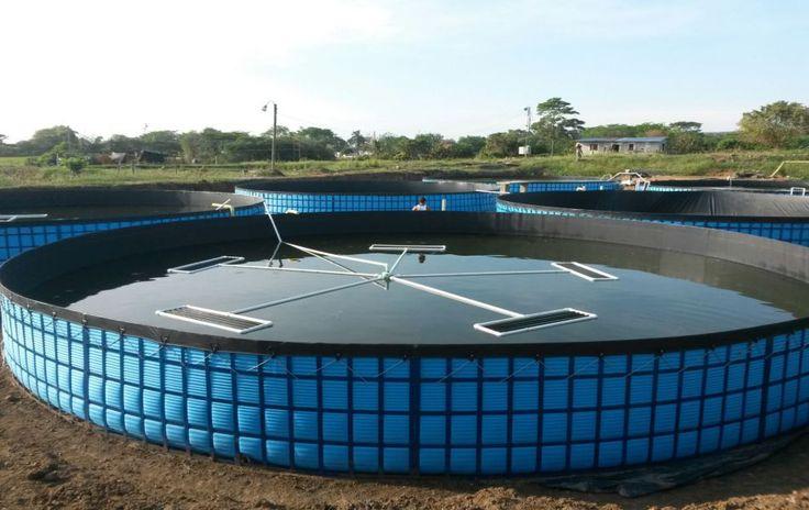 Proyecto desarrollado en el año 2014 para piscicultores de Asosierra en este municipio tolimense.