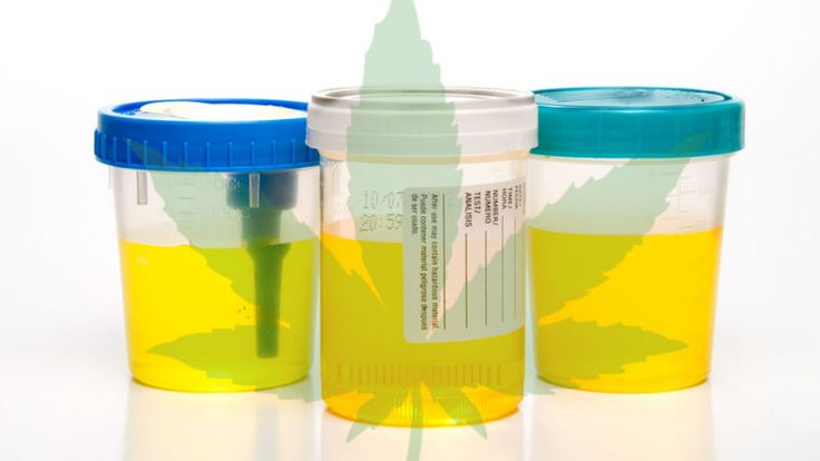 Perhaps you've found yourself in a situation where you have to take a drug test. And perhaps you are a marijuana enthusiast or just sporadically partake in the pleasure. This intersection is Not Good, but we have some tips on how marijuana users can pass a urine test, and piss like you're off the pot.