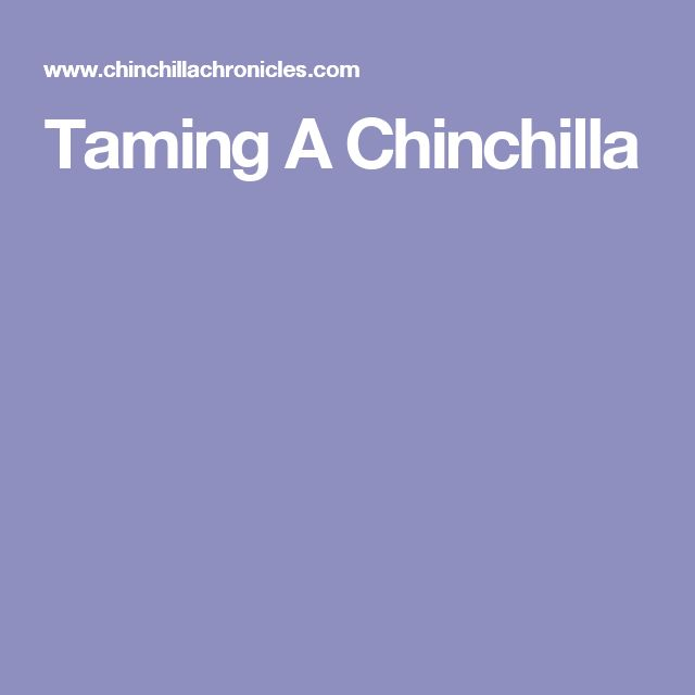 Taming A Chinchilla