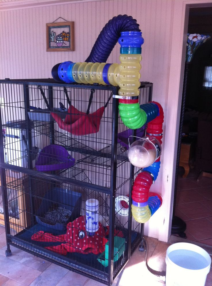 ferret cage like this at amazon free delivery and cheaper then the pet stores in the city $148